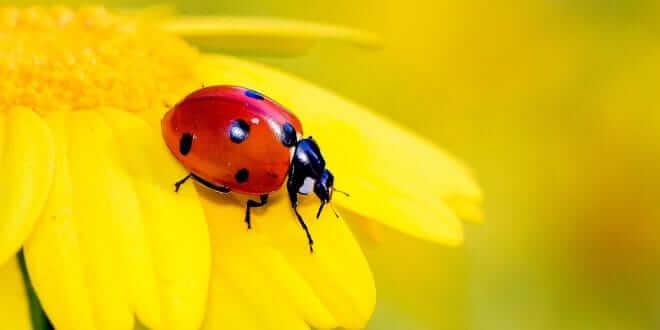 """La reducción de las poblaciones de insectos """"amenaza el colapso de la naturaleza"""""""