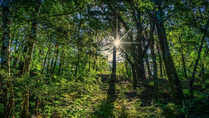2 horas semanales en la naturaleza podría mejorar tu salud