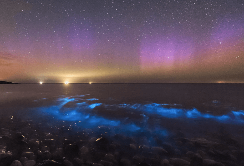 Bioluminiscencia: ¿Qué es y por qué ocurre? en Baja California Sur