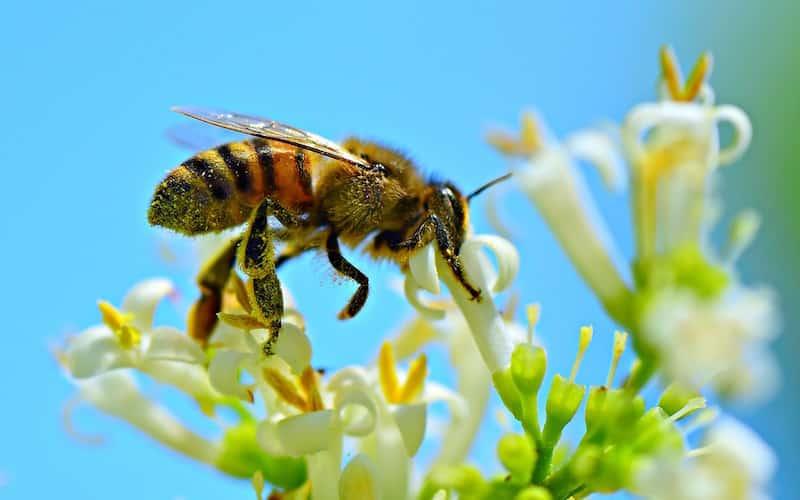 Foto de abejas