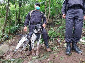 Perro Furst El Salvador